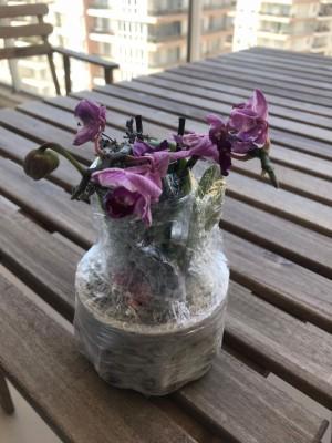 Çiçek Sepeti Doğum Günü Çiçeği Solmuş Olarak Gönderdi