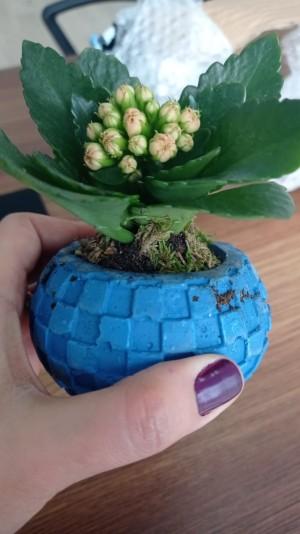 Çiçek Sepeti Rezalet Bir Yeşil Yaprak Gönderdi