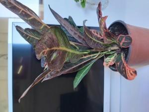 Çiçek Sepeti Kötü Ve Geç Ürün Teslimatı