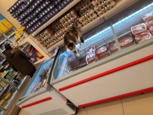 Şok Market Mağaza İçerisinde Hayvan Olması
