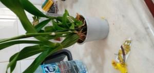 İkizler Peyzaj (facebook) Sipariş Ettiğimiz Çiçekler Kırık Ve Kötü Geldi